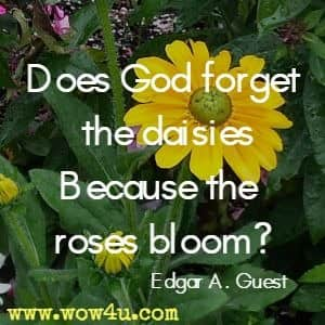 Does God forget the daisies because the roses bloom? Edgar A Guest