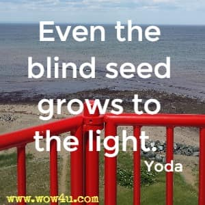 Even the blind seed grows to the light.   Yoda