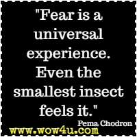Fear is a universal experience. Even the smallest insect feels it. Pema Chodron