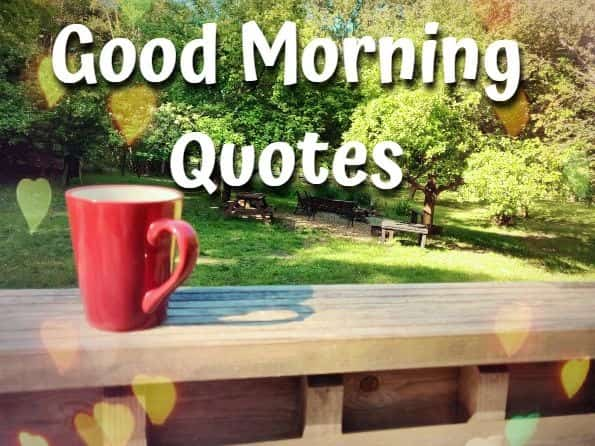 Goodmorning,quotes,cup,trees
