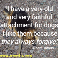 I have a very old and very faithful attachment for dogs. I like them because they always forgive. Albert Camus