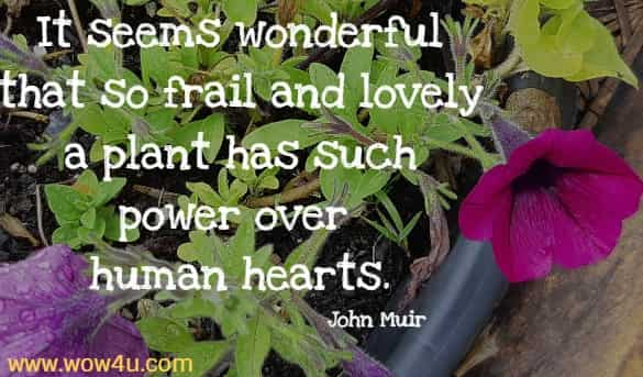 It seems wonderful that so frail and lovely a plant has such power over human hearts.  John Muir