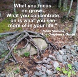 What you focus on grows. What you concentrate on is what you see more of in your life. Robin Sharma