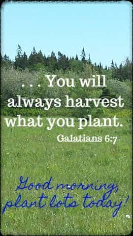 . . . You will always harvest what you plant. Galatians 6:7   Good morning, plant lots today!